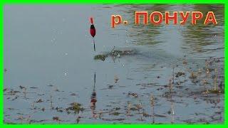 Рыбалка на реке Понура. Ловля на поплавок. Подводная съемка. Fishing(Рыбалка на реке Понура. Ловля на поплавок. Подводная съемка..….((Мой канал- это (в основном) канал ЛЮБИТЕЛЯ-ры..., 2016-08-10T15:00:53.000Z)