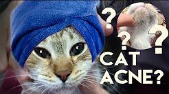 hqdefault - Cat Acne Treatment Uk