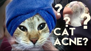 Your Cat Has Acne
