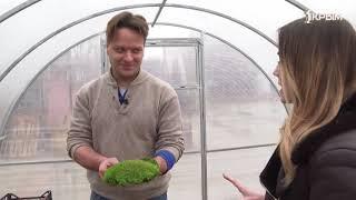 Природа в интерьере! Как мох используют в дизайне и почему это становится популярным