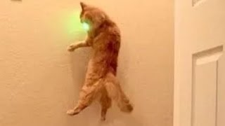 Animals Chasing Laser Pointers - A Funny Animal Videos Compilation || NEW HD