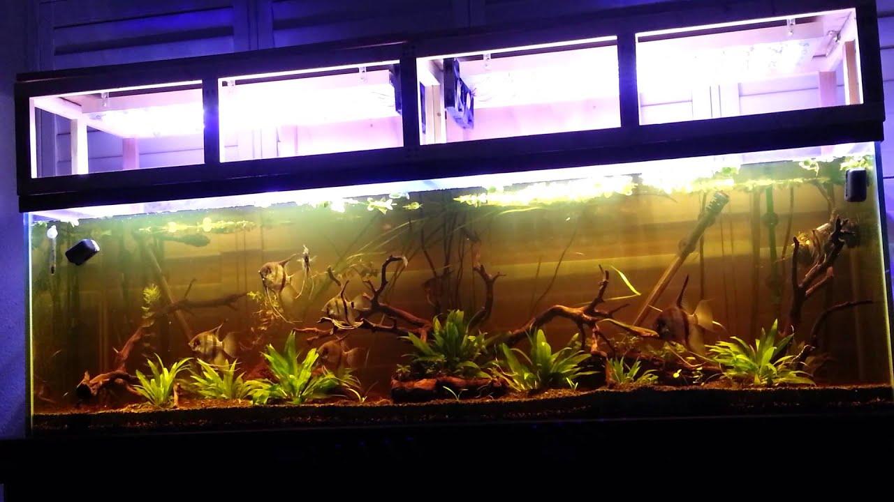 125 gallon freshwater planted led s amazon blackwater biotope
