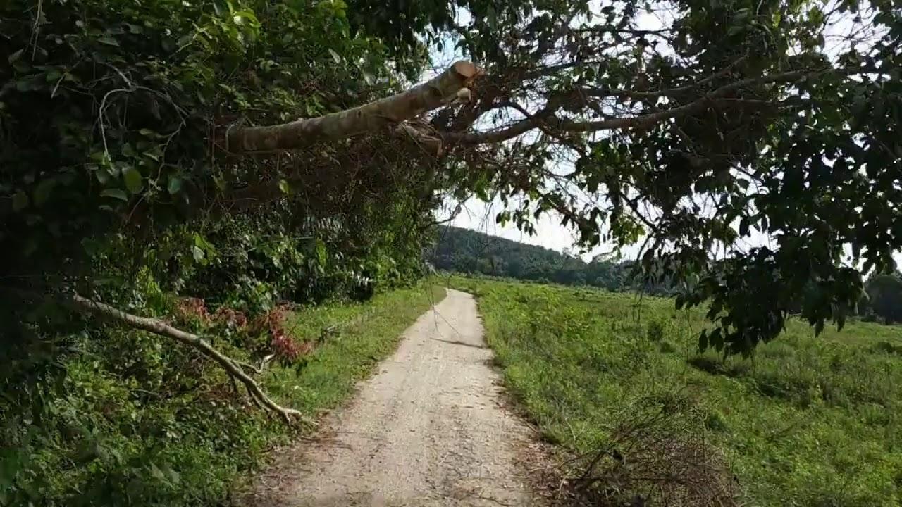 Riding around Tanjung Ipoh padi fields. (Negeri Sembilan)