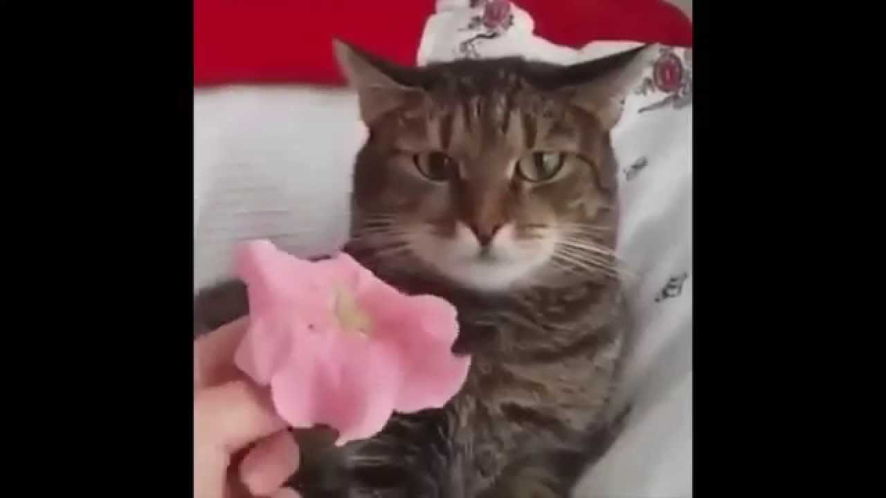Cat breaks after receiving a flower on its head original youtube cat breaks after receiving a flower on its head original mightylinksfo