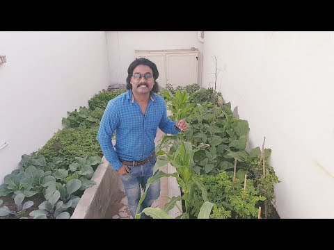How to make a  Organic Vegetable Garden in your Home
