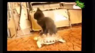 Веселое видео про смешных кошек  Кошки балуются  Hilarious video of funny cats