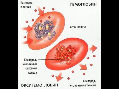 Гемоглобин и эритроциты, их клиническая интерпритация
