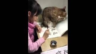 越想專心的時候,喵星人越喜歡「亂入」。網友小鈴噹家中養了5隻貓,女兒...