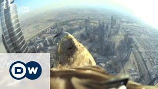 Dubai: Spektakulärer Sturzflug | Journal