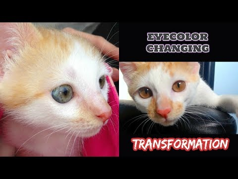 AMAZING EYECOLOR changing TIMELINE of my Kitten!!  👀♡