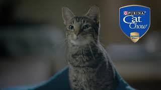 Nuevo Purina Cat Chow