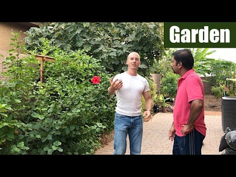 Growing a Tropical Fruit Tree Forest & Garden In His Backyard | Part 3