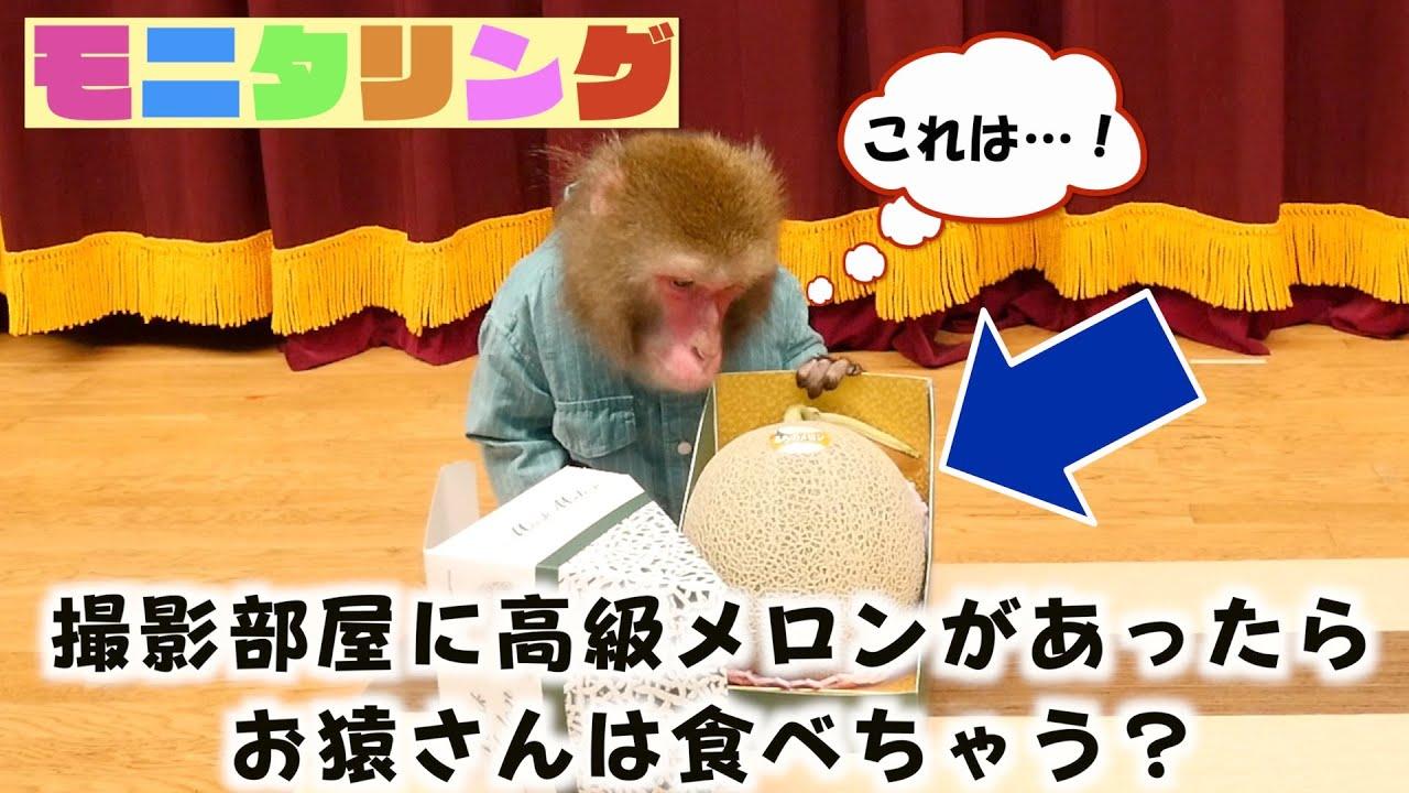 飼い主が置き忘れた「高級メロン」を見つけたお猿さんの行動がすごい。