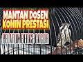 Pelatuk Beras Gacor Untuk Masteran Konin Murai Batu Kacer Dan Burung Lomba Lainnya  Mp3 - Mp4 Download