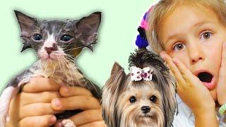 24 ЧАСА мои домашние ПИТОМЦЫ управляют МОЕЙ ЖИЗНЬЮ Яна Котенок Собака и Кот СБОРНИК Серии