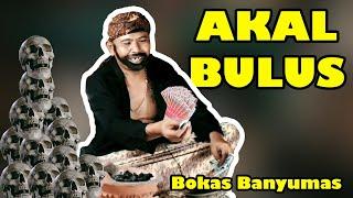 Akal bulus ( ngapak ) | BOKAS BANYUMAS