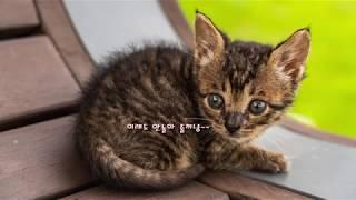 Astro J5 첫비행과 새끼 고양이 카멜레온 산책시키…