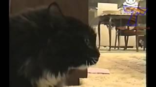 пипец какое ржачное видео про животных,смеялся очень долго