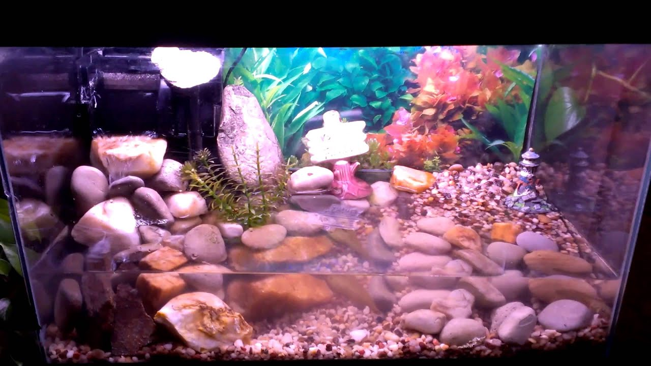 10 gallon terrarium. 3 tadpoles. - YouTube 10 Gallon Vivarium
