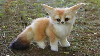 11 Cutest Baby Animal
