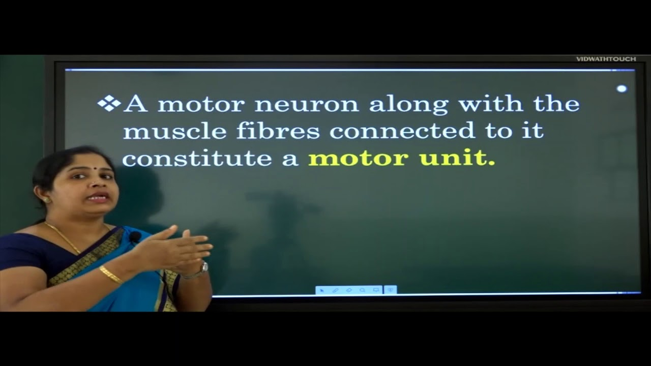 I PUC | Biology | Locomotion and Movement- 02