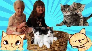 КотоКафе Катя и Настя играют с кошками Огромный кот Леня Видео для детей