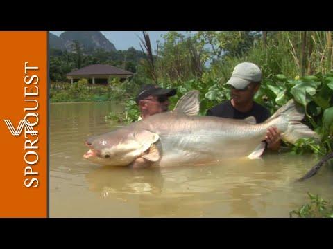 World Record Multi-species Fishery Gillham's Resort, Thailand 🎣