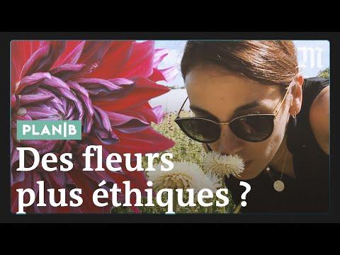 Pourquoi Les Roses De La Saint-Valentin Sont Un Cadeau Empoisonné #PlanB