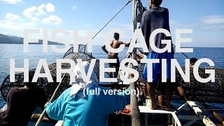 Fish Cage Harvesting in the Philippines (Full Version)