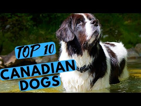 Top 10 Canadian Dog Breeds List