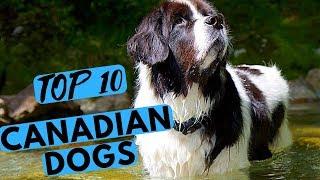 Top 10 Canadian Dog Breeds List