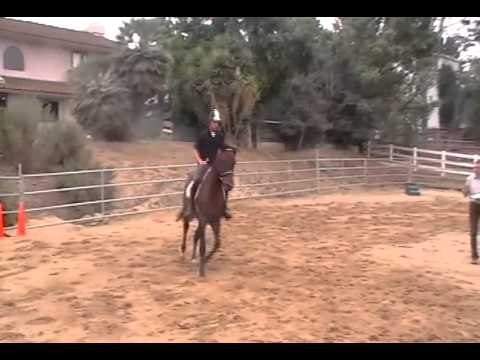 Alexis Helfrich Riding LeoneSE