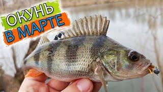 ЛУЧШЕЕ ВРЕМЯ ДЛЯ ЛОВЛИ ОКУНЯ Ловля окуня в марте Рыбалка на окуня Рыбалка на спиннинг 2020