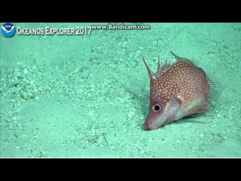 Okeanos dive 8 Palmyra Atoll