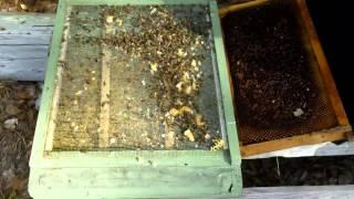 Storing Beekeeping Equipment
