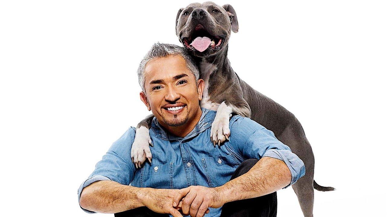 Cesar Millan Youtube Dog Training