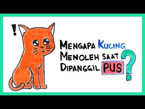 "Mengapa Kucing Menoleh Saat Dipanggil ""Pus""?"