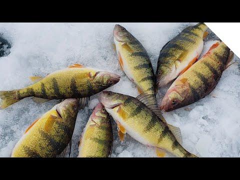Ice Fishing For Perch On Sodus Bay, NY