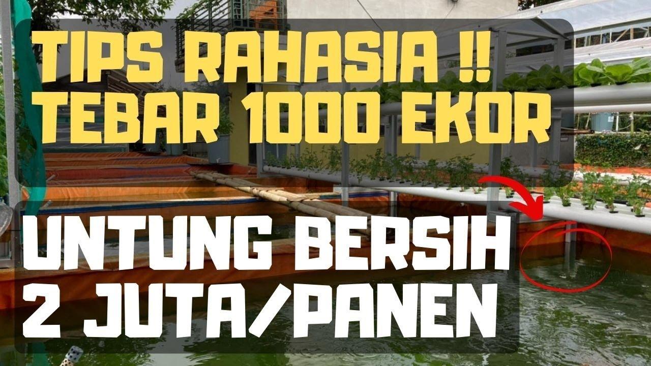 Download Tips Rahasia Budidaya Lele Menguntungkan !!  Tebar 1000 ekor Margin Bersih 2 Juta Sekali Panen