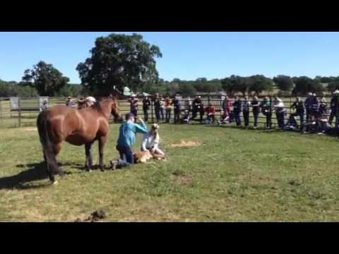 Madigan Foal Squeeze