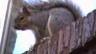 Squirrel Making Noise