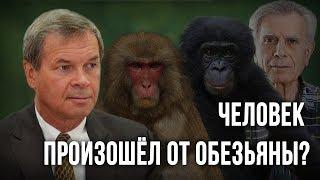 Человек произошёл от обезьяны? Анатолий Клёсов