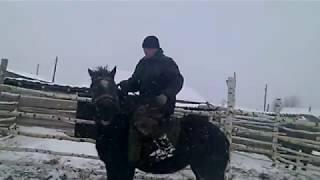Лошадь первый раз под седлом. Разведение лошадей