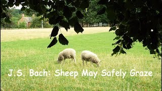 J. S.Bach: Sheep May Safely Graze - The Royal Philharmonic Orchestra