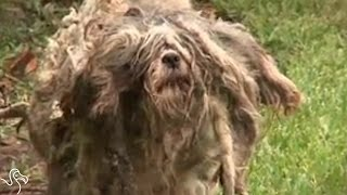 Stray Dog Was So Matted No One Could Tell What He Was