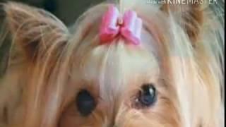 Как назвать щенка? Уроки про животных.