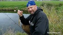 Matze Koch: Fische aus Freilaufhaltung - Matzes Mätzchen 01-2020