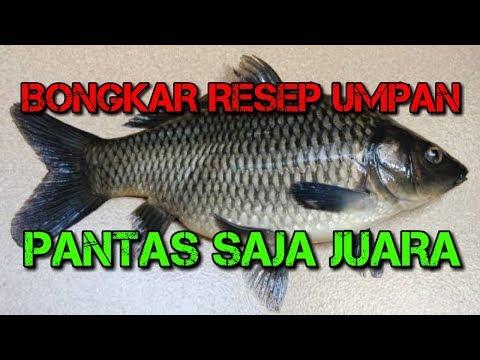 Seperti ini Rahasia Umpan Ikan Mas Juara Mancing Harian