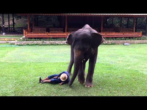Protective Elephant    ViralHog
