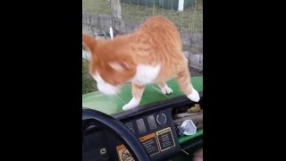 (Raw Video) Tiger the Cat - later killed with bow and arrow